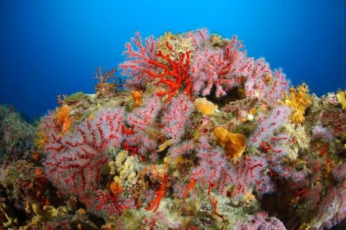 Un weekend a portofino fra vip margherite e coralli for Immagini coralli marini