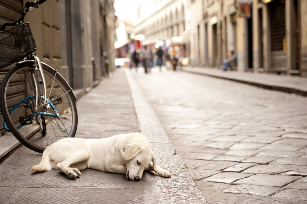 Cani a Firenze, Firenze dog friendly: dove è ammesso fido